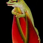 Day Gecko by Brian Avery