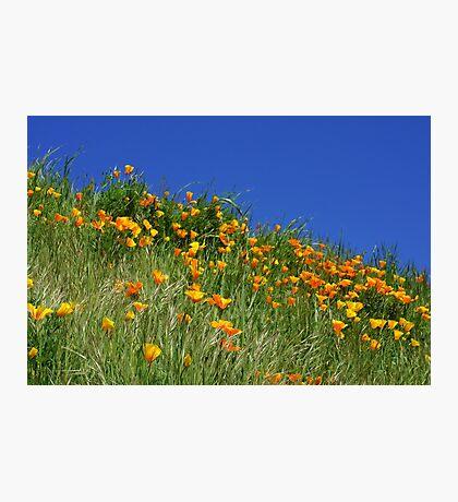 Poppy Flowers Meadow Blue Sky Green Hillside Art Photographic Print