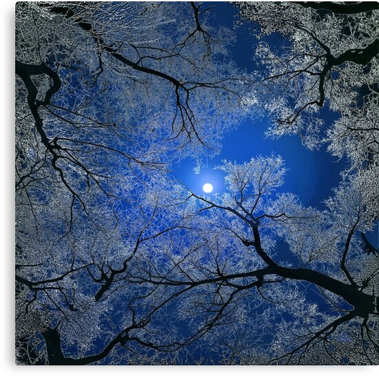 Moonlight Trees by Igor Zenin