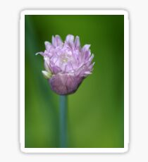 Chive Flower Opening Sticker