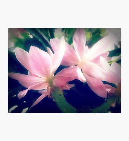 Christmas Cactus - at front porch Photographic Print