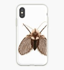 Clogmia albipunctata iPhone Case