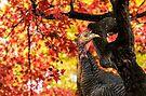 HAPPY THANKSGIVING FROM WILD TURKEY by LudaNayvelt