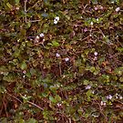 Blooming flowers in the hedge  by Danielle Espin