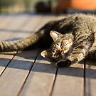 Afternoon Sun Stretch by Danielle Espin