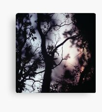 Tree branches on summer evening  in Spain square medium format film analogue photographer Canvas Print