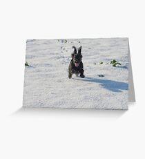 Black cocker spaniel in snow Greeting Card