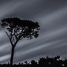 Lone Tree by marting04