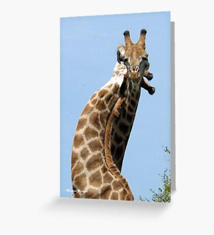 WHEN GIANTS COLLIDE - GIRAFFE – Giraffa Camelopardalis (KAMEELPERD) Greeting Card