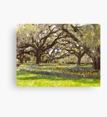 Brookgreen gardens South Carolina Canvas Print