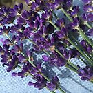 Lavender on Jeans by Christine  Wilson