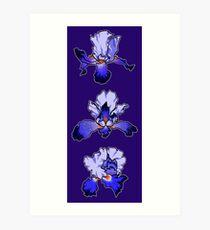 Iris -  February Birth Month Art Print