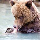 Alaskan Brown Bear by Allyeska