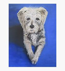 Buster - A Devoted Companion Photographic Print