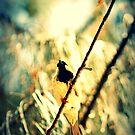 Branch Birdie II by tropicalsamuelv