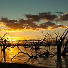 Menindie Lakes, NSW, Australia by Caroline  Lloyd