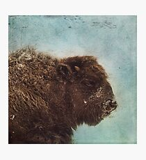 Wood Buffalo Photographic Print