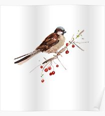 Cute sparrow Poster
