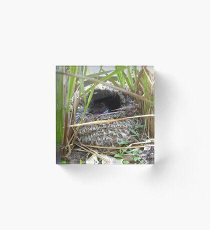 Broody Brown Bantam in the Purple Grass Acrylic Block