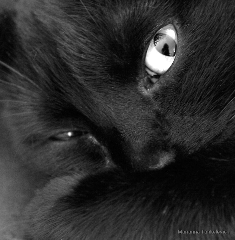 Portrait of my Cat by Marianna Tankelevich