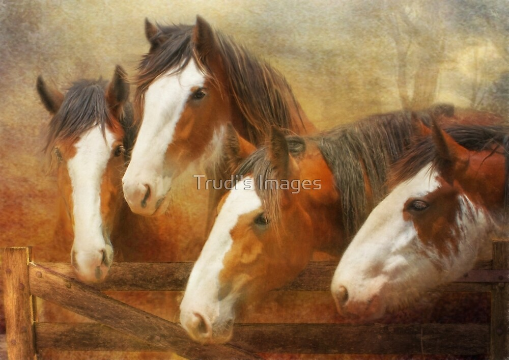 Faces Of Four by Trudi's Images