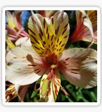 Tigerlily Flower Sticker