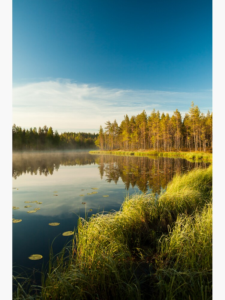 Morning at forest lake by Juhku