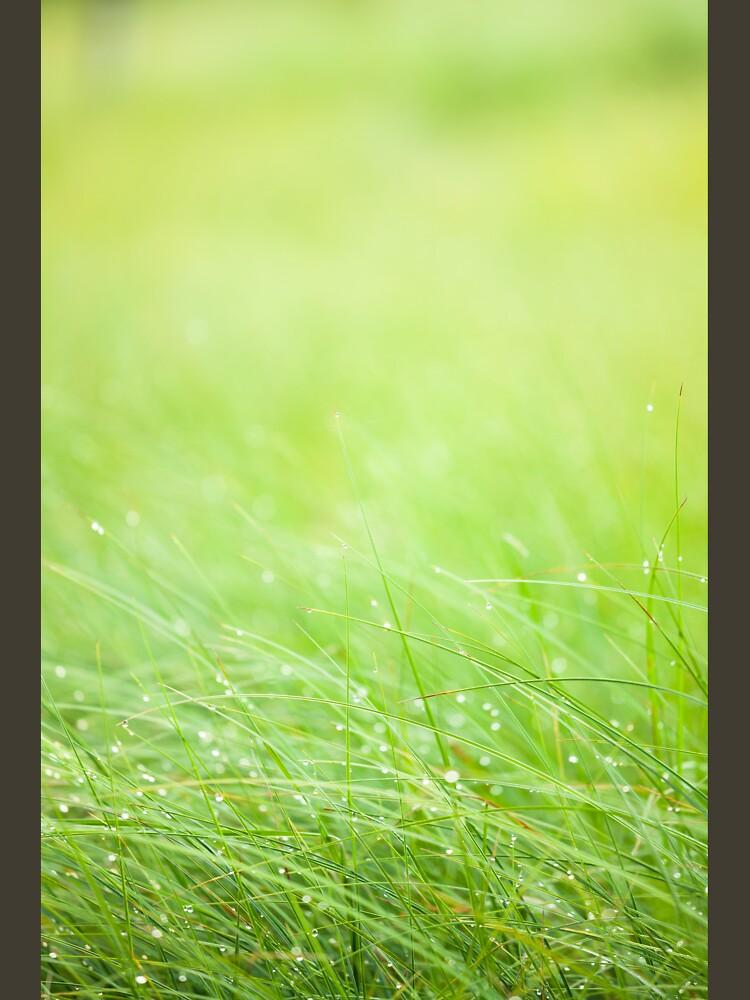 Wet grass by Juhku