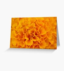 Sunny Marigold Greeting Card