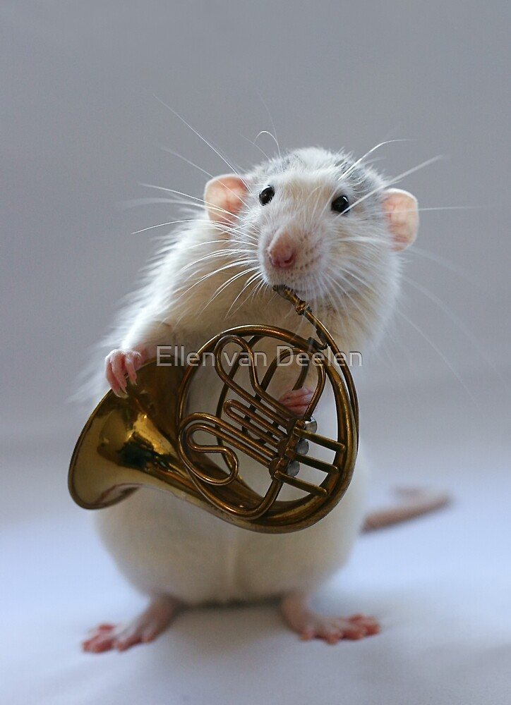 French horn. by Ellen van Deelen