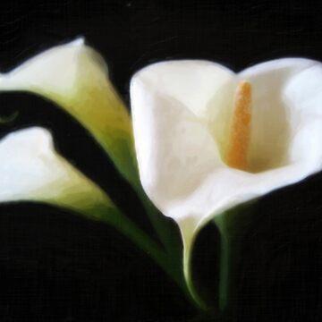 Elegant Calla Lily Flowers 9 Painterly by TravelPhotoArt
