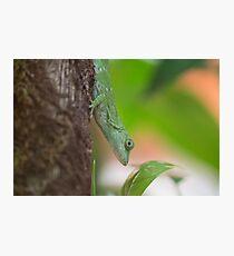 Green Lizard Photographic Print