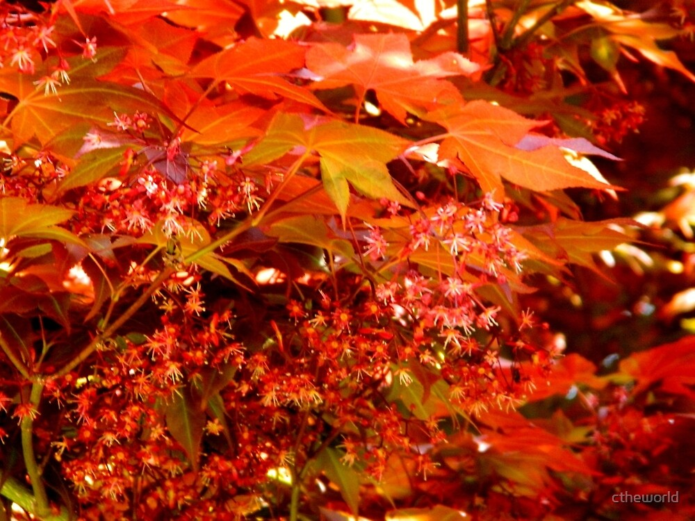 Leaves of Red   ^ by ctheworld