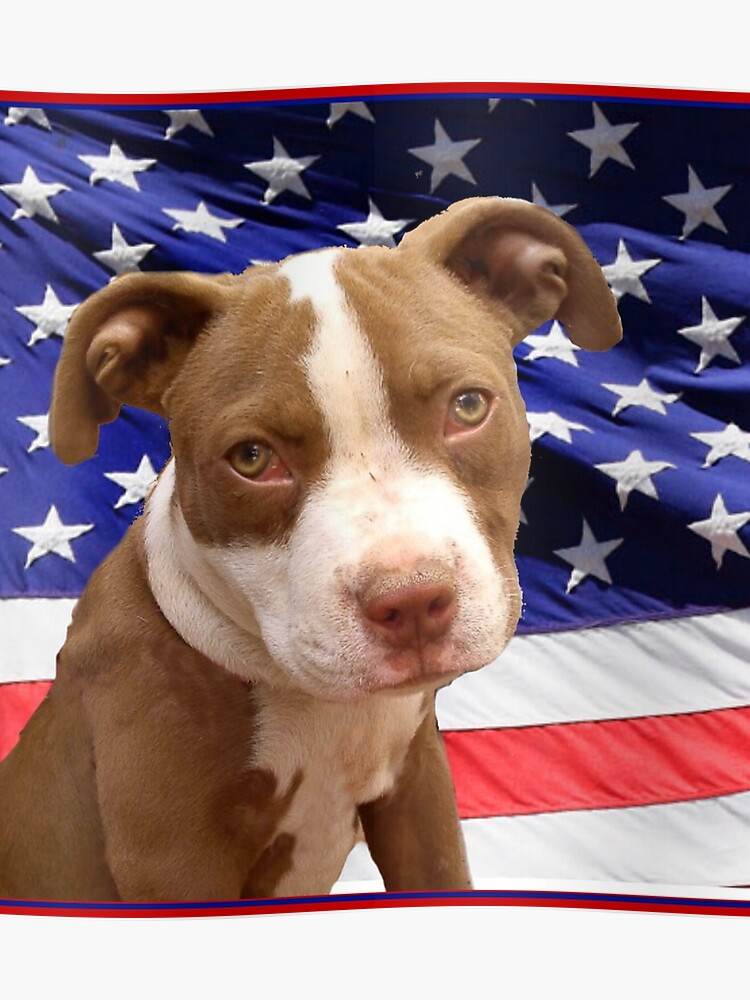 American pitbull Terrier puppy | Poster
