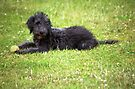 Happy Six months old, Barney the pup. by Michael Haslam