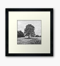 Countryside Tree Framed Print