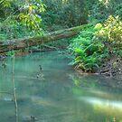 North Johnstone River, Malanda, Queensland by Adrian Paul
