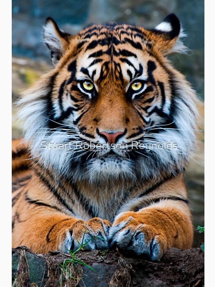 Sumatran Tiger by Sparky2000