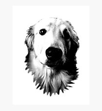 Who Me? Funny Dog Expressions. Golden Retriever Images. Photographic Print