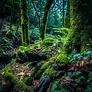 Into The Woods by Blackmoonimages