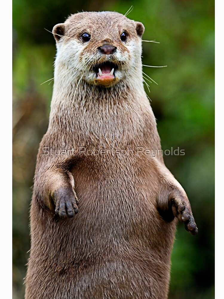 Otter by Sparky2000