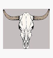 Cow Skull Photographic Print