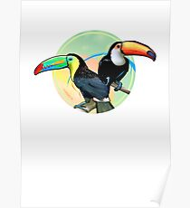 Birds of Paradise - Toucan Poster
