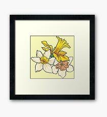 Daffodil - March Birth Flower Framed Print