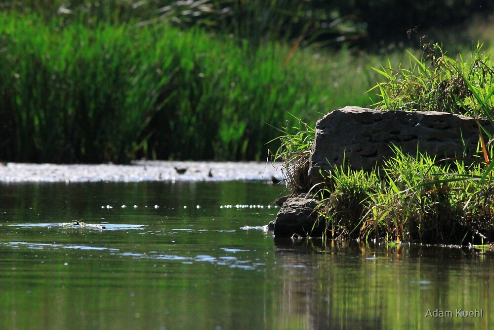 Top Tier Pond at Lisle Community Park by Adam Kuehl