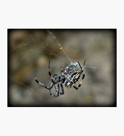 ...said the Spider to the Fly Photographic Print