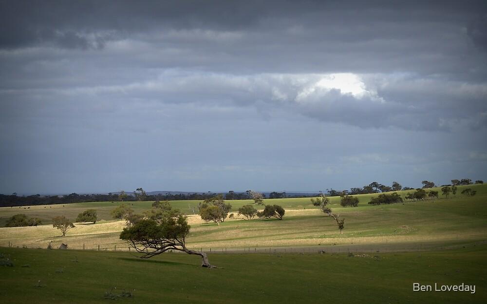 Paddock North of Callington by Ben Loveday