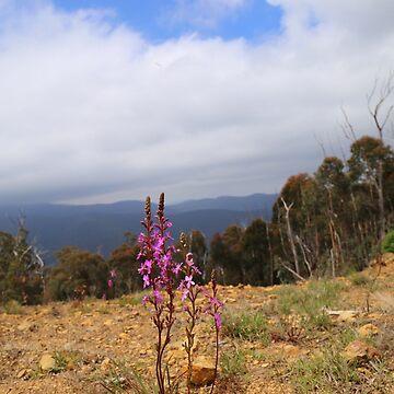 Purple high country by HauntedHills