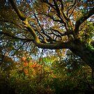 Autumn by David Howlett