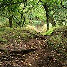 Woodland Path by IanJTurner